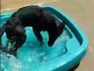 First Dip in a pool.